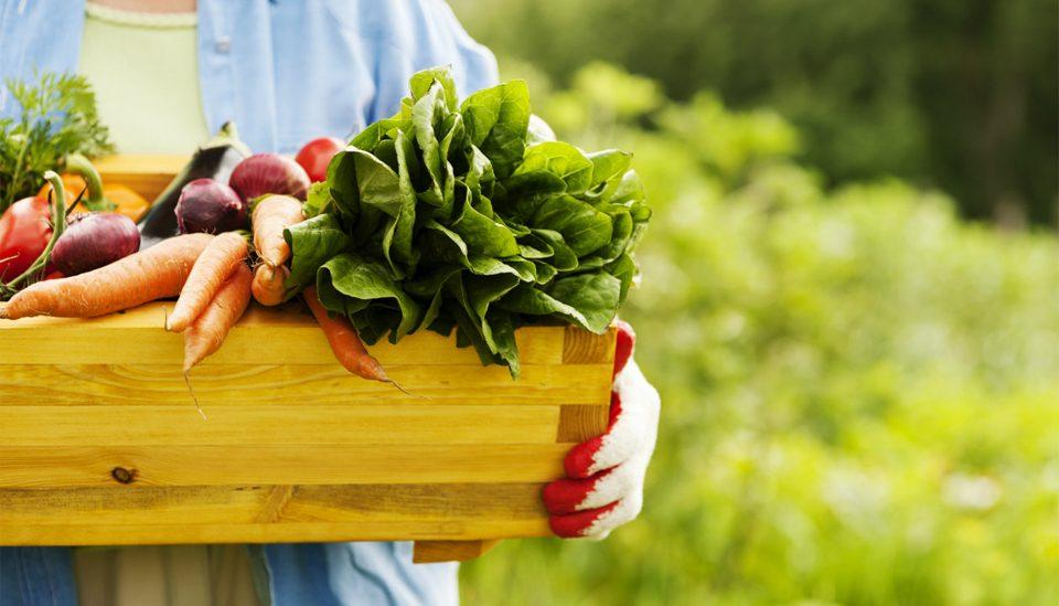 Elige alimentos orgánicos, naturales