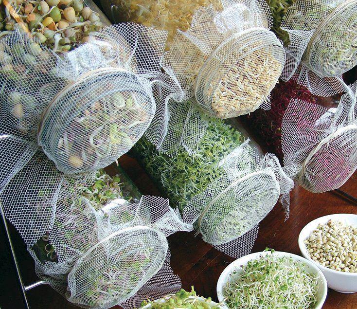 ideas-para-hacer-brotes-legumbres