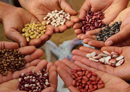Activación de Semillas y Frutos Secos